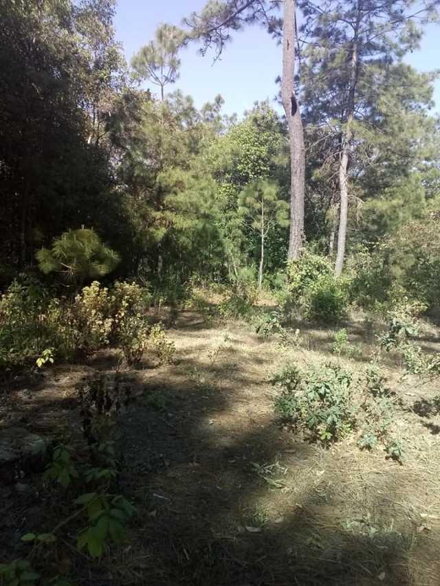 Remato 2 hectáreas boscosas Santiago Undameo en la comunidad loma caliente